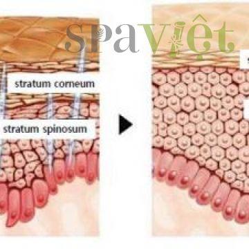 Liệu trình trẻ hóa da với tảo vi kim giúp thu hút khách hàng, tăng lợi nhuận spa